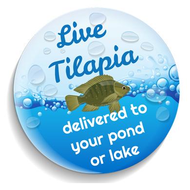 Live Tilapia